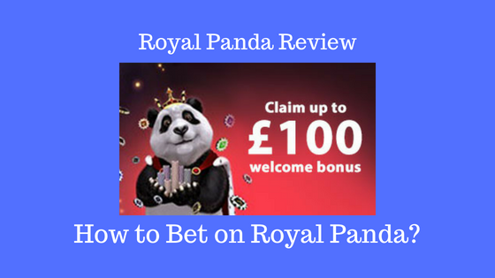 Royal Panda Review How to bet on Royal Panda